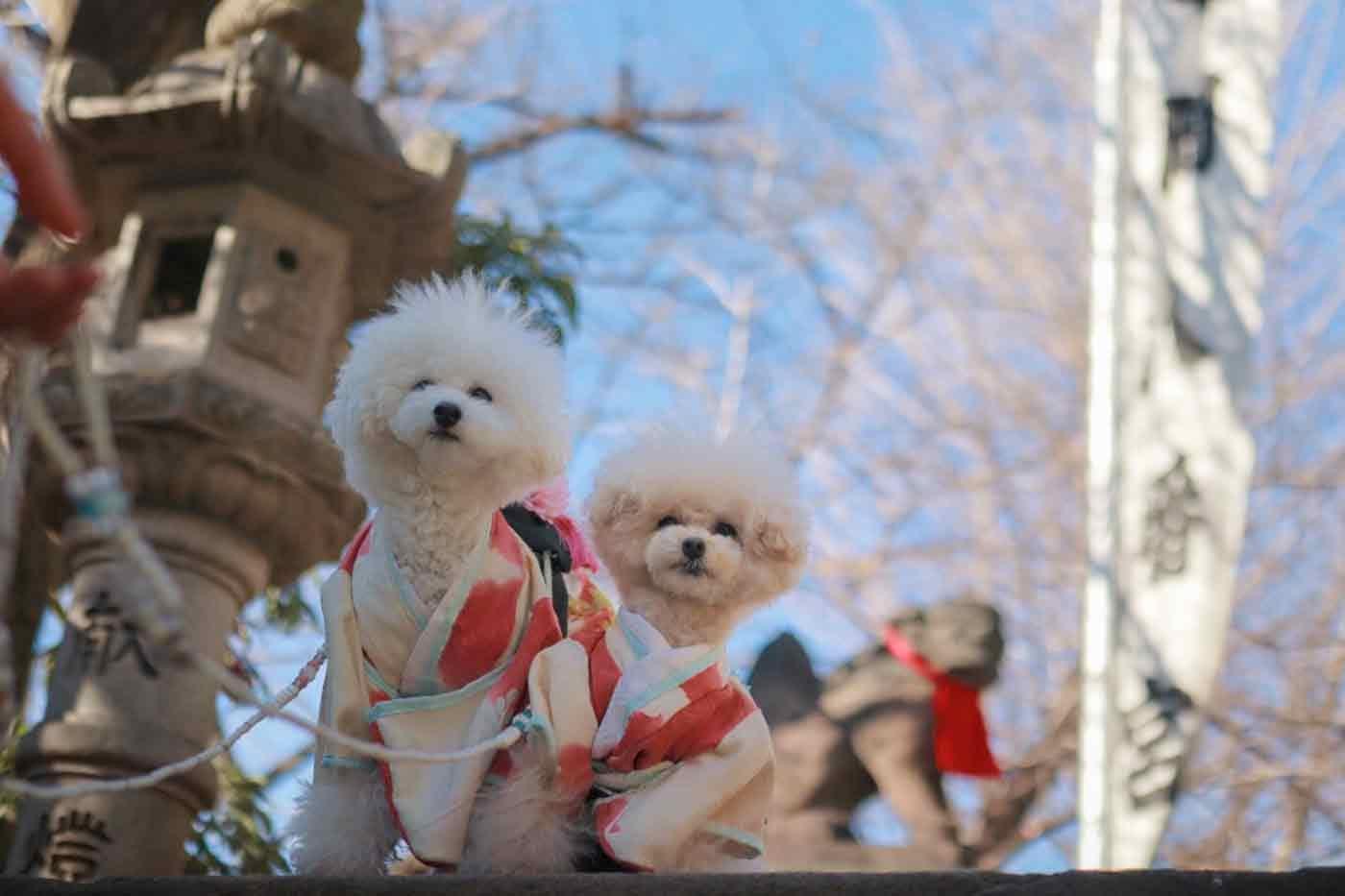 【市ヶ谷】都内で愛犬と密回避!まだまだ年始のご祈祷ができるスポットを紹介