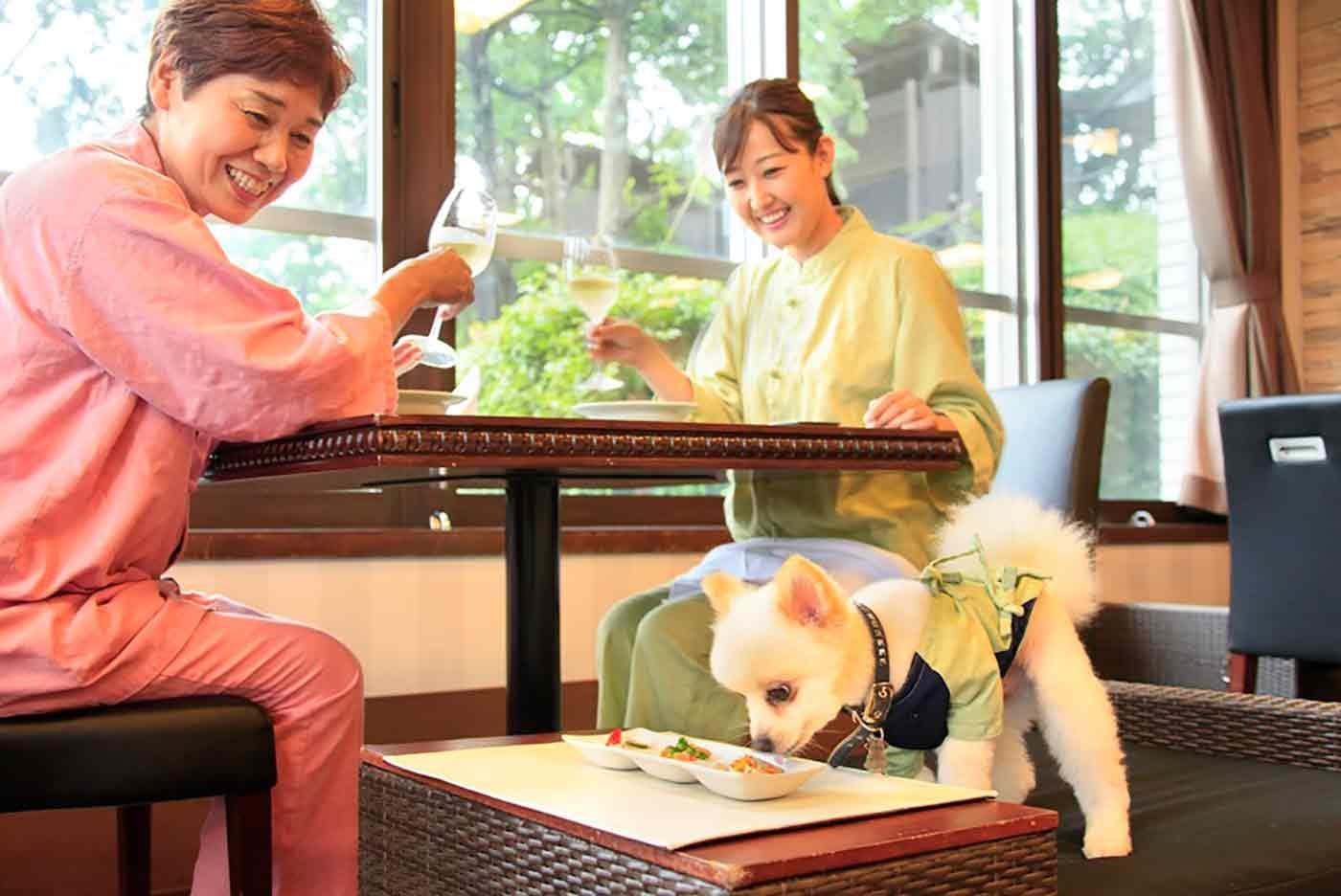 宿泊料10%OFF!伊豆の「愛犬お宿」で最高の休日を過ごそう!