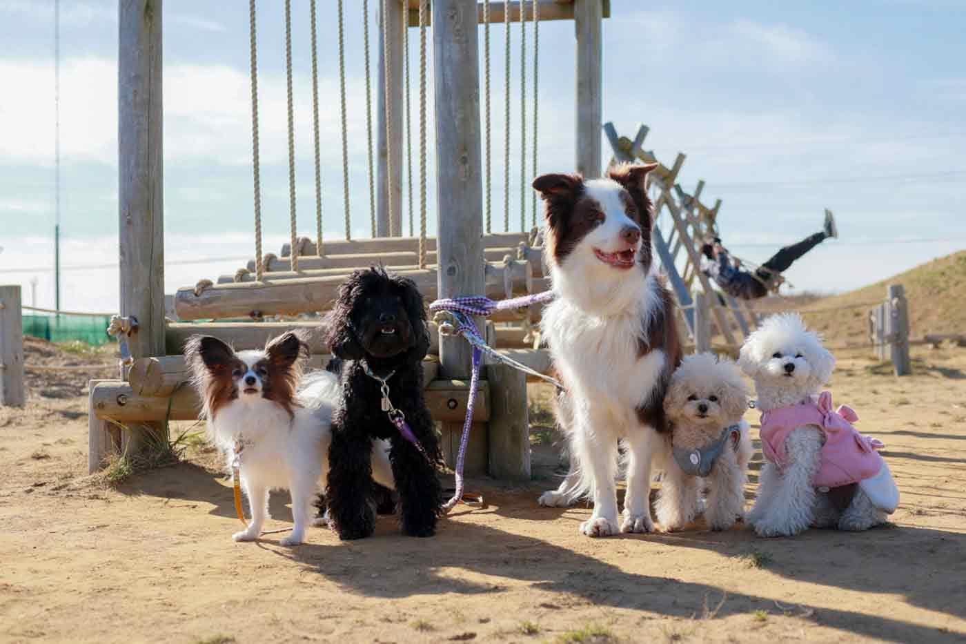 海の駅 九十九里 愛犬と立ち寄りスポット 公園