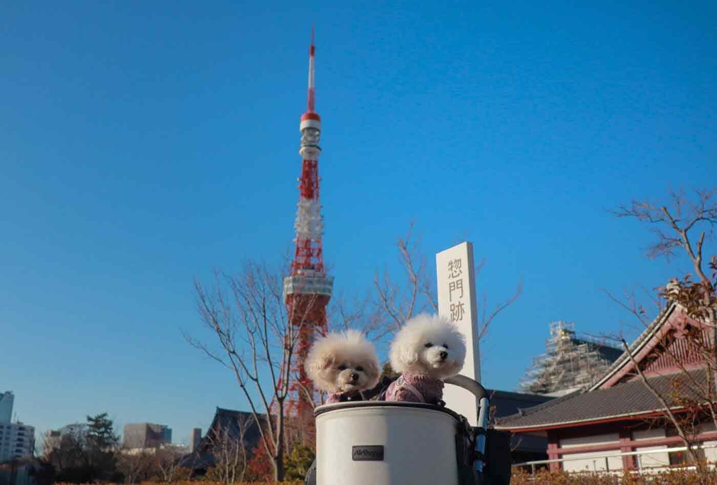 東京タワーと犬
