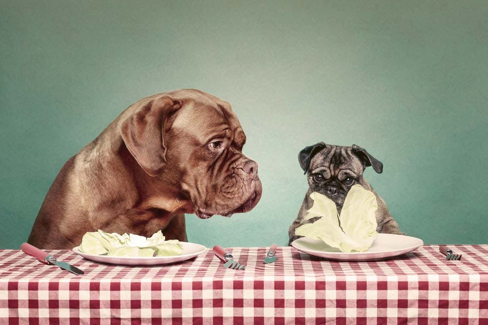 レタスと犬