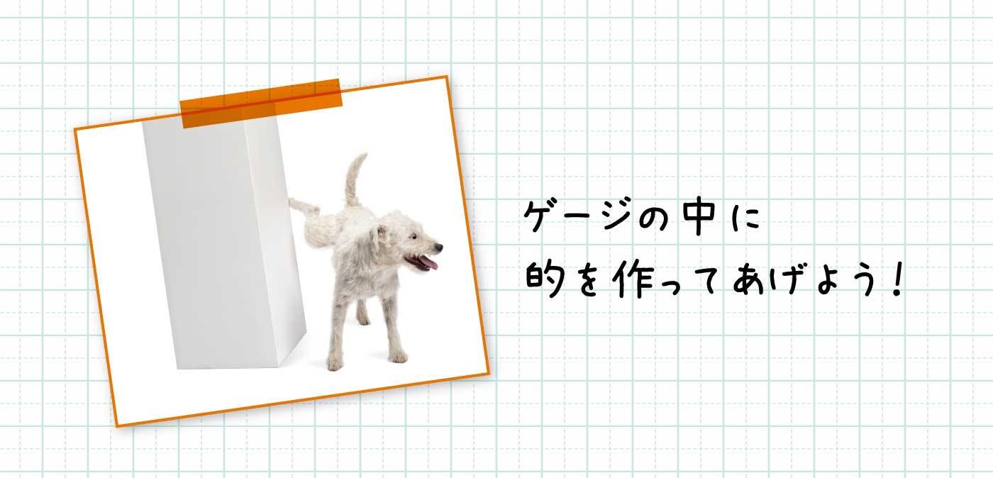 オスのわんちゃんのトイレトレーニング