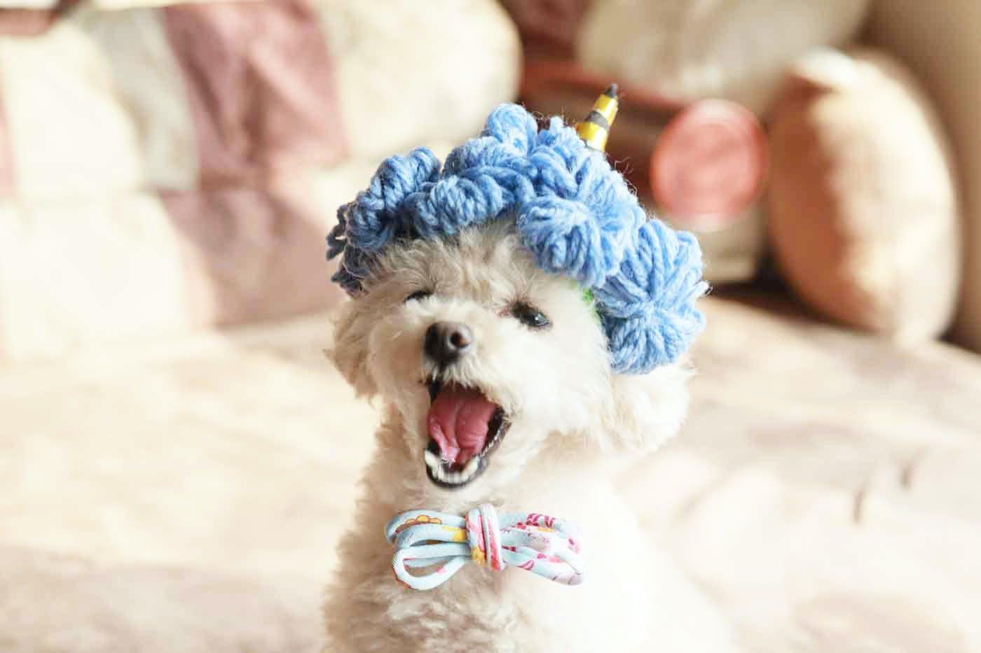 【15分で完成】100均アイテムだけで愛犬用の節分のかぶりものを簡単手作り!