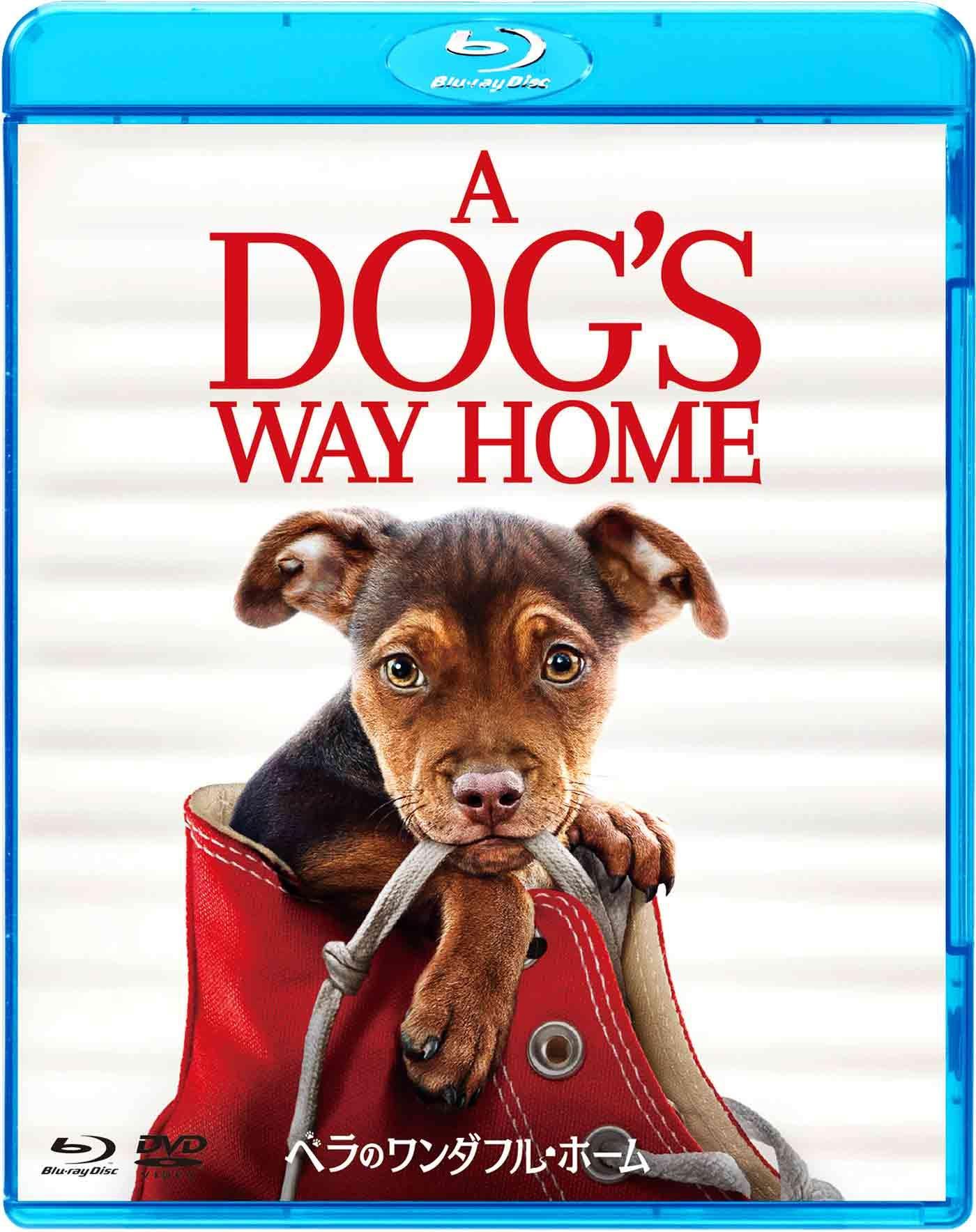 ベラのワンダフル・ホーム  犬好き映画コレクション ピットブル