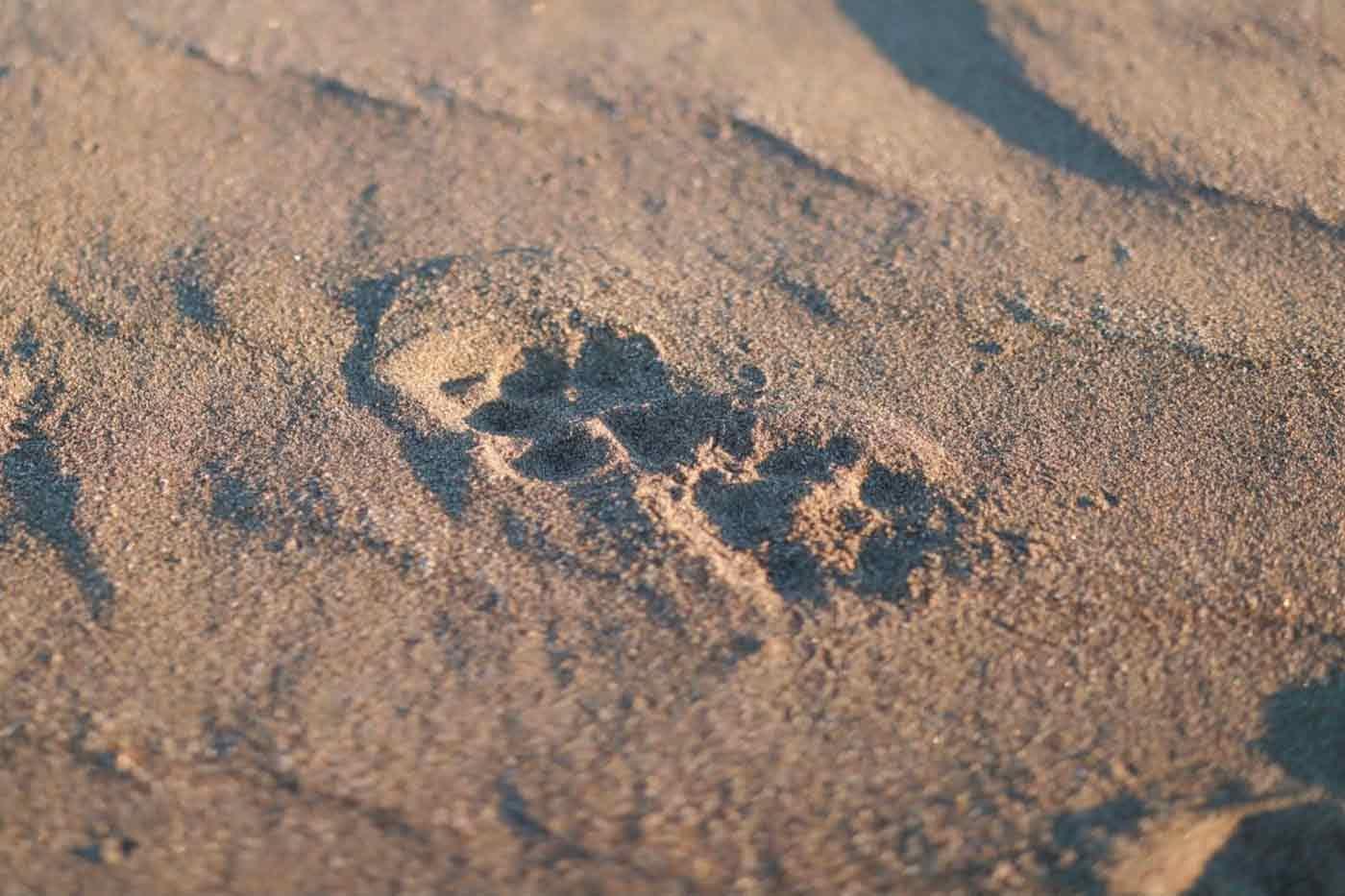 九十九里 愛犬とお出かけプラン 砂浜