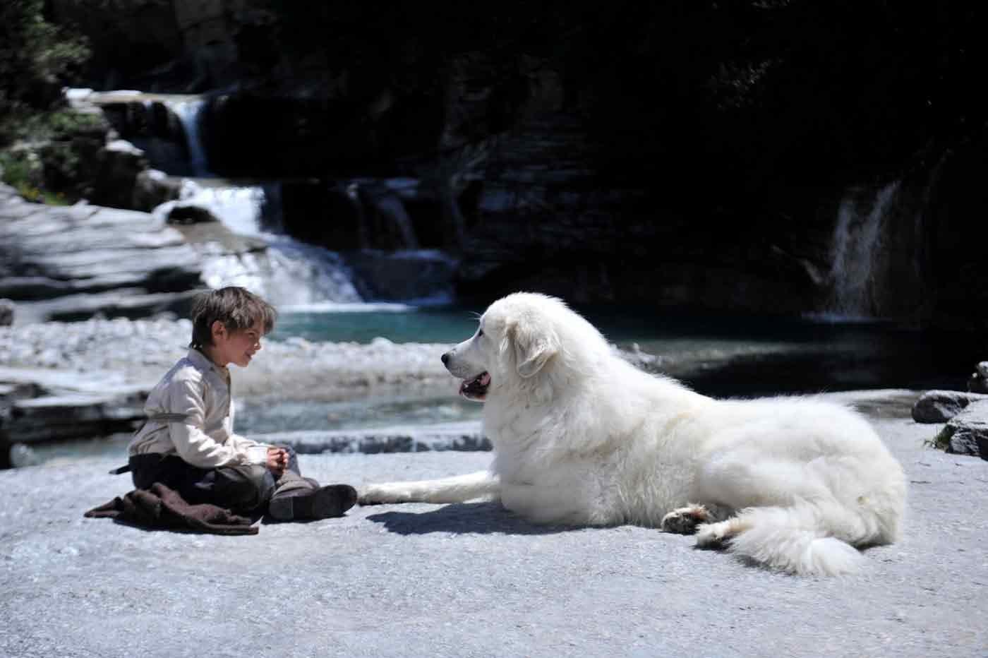 ベル&セバスチャン 犬好き映画コレクション グレートピレニーズ