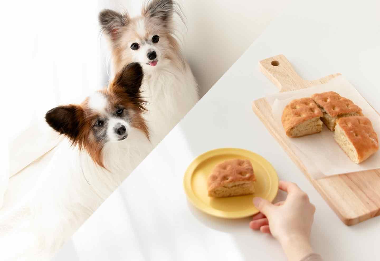 """【作業時間15分】""""発酵なし""""で作れる簡単な愛犬用パン!おやつとして作り置きしよう♪"""