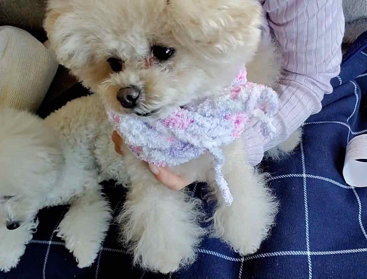 愛犬用指編み マフラーの作り方