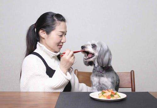 愛犬用 鮭と菜の花のちらし寿司レシピ ひな祭り