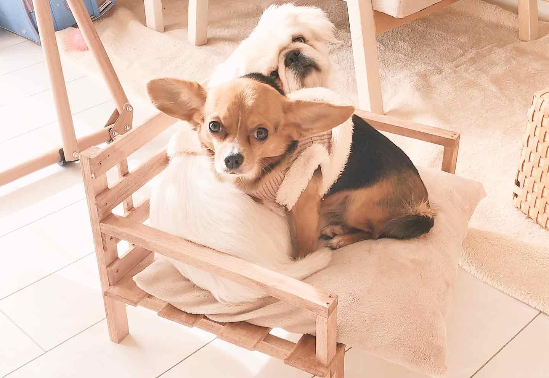 【簡単3STEP】お手軽DIY!100均のすのこと木材だけで愛犬用ソファーを手作りする方法