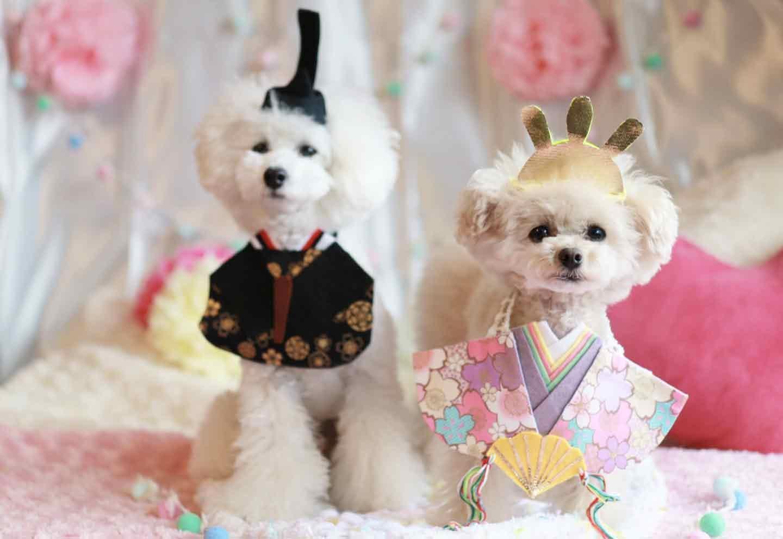 【簡単10分】愛犬とひな祭り♪100均のフェルトの手作りおひな様スタイで一緒に成長を祝おう!