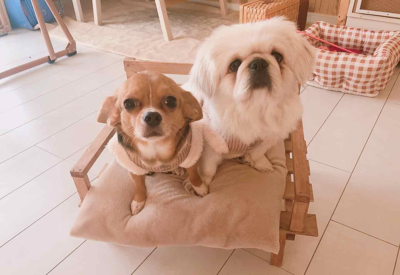 手作り愛犬用ソファー DIY  完成