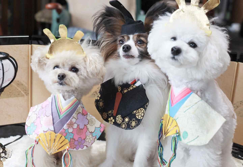 愛犬とひな祭り お殿さまとお姫さま 記念撮影