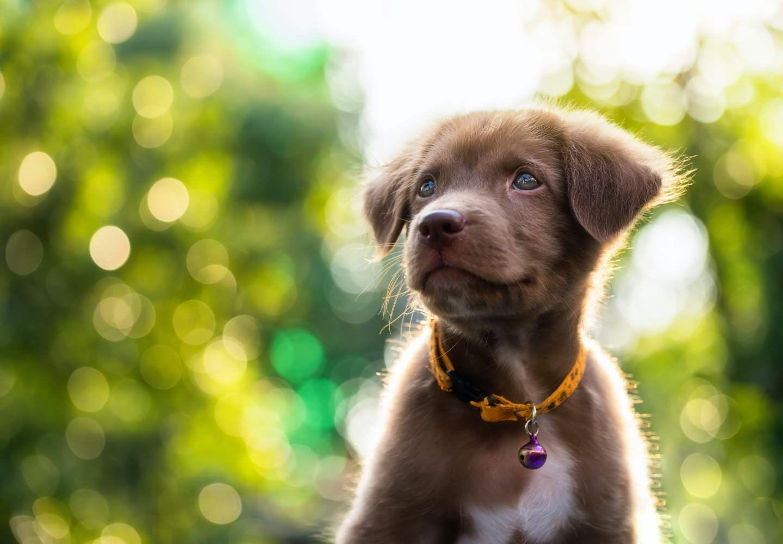 【獣医師監修】犬にオクラを食べさせても大丈夫?犬、オクラ