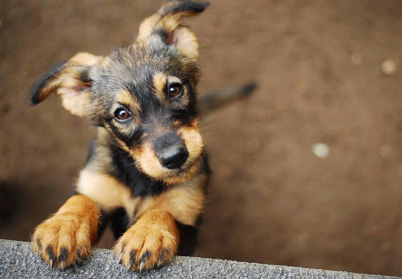 【医師監修】犬アレルギーの症状とは?原因や治療法、愛犬と快適に暮らすための対処法などを紹介