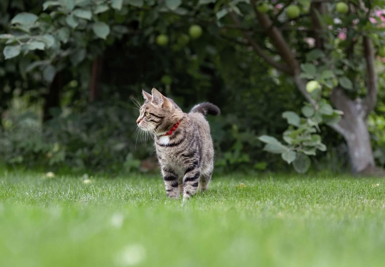 外に出た飼い猫