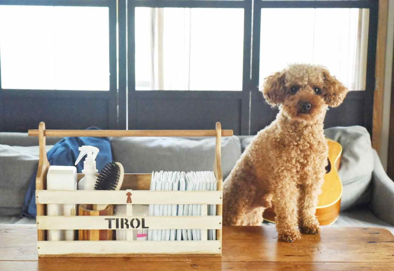 【100均の木材だけ】まな板とすのこを活用してラックを手作り♪愛犬のお手入れ用品をオシャレに片付けよう!