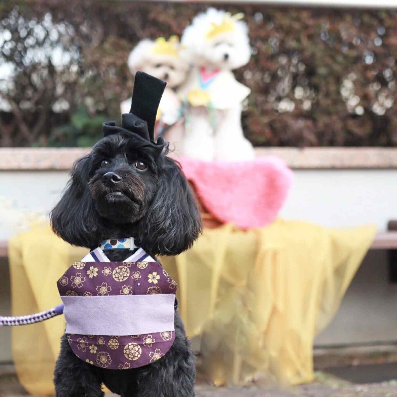 愛犬とひな祭り お殿さま様スタイ 着用画像