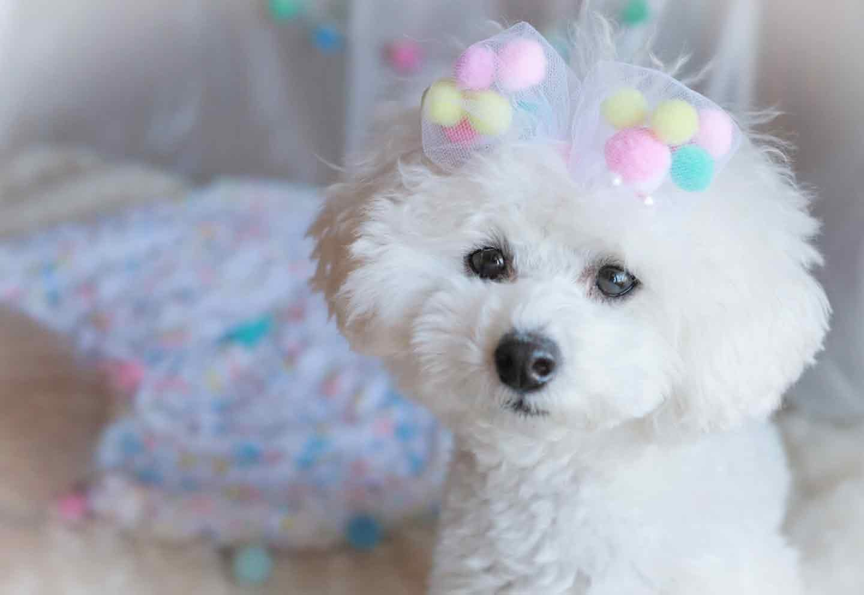 愛犬用ふわふわ丸リボンの作り方