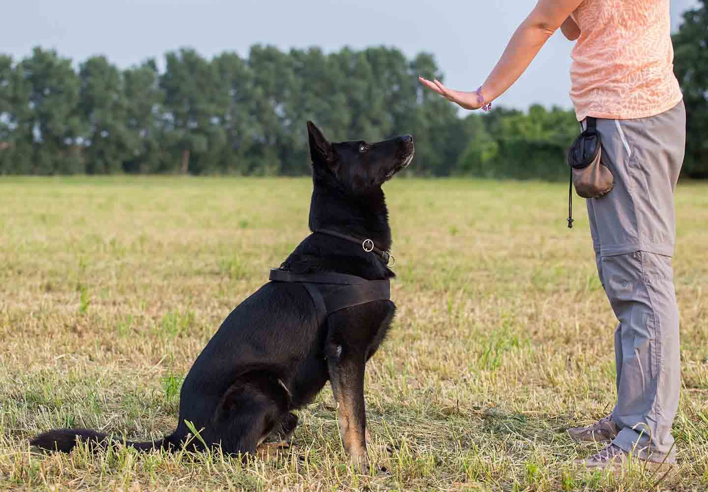 【獣医師監修】犬のしつけの基本とは?教える手順やタイミング、注意点について解説