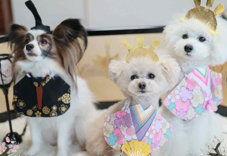 愛犬とひな祭り お殿さまとお姫さま