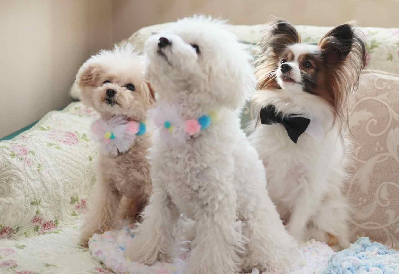【簡単10分】おめかしリボンや蝶ネクタイで気分転換♡安くて可愛い愛犬用手作りチョーカー4種を紹介!