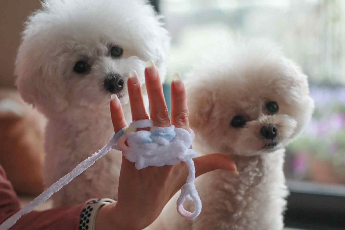 愛犬用指編み リリアン編み