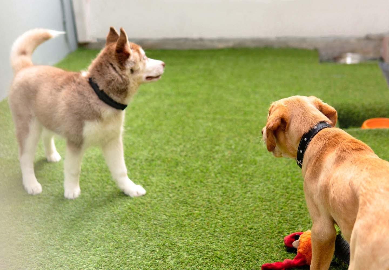 人工芝で遊ぶ犬