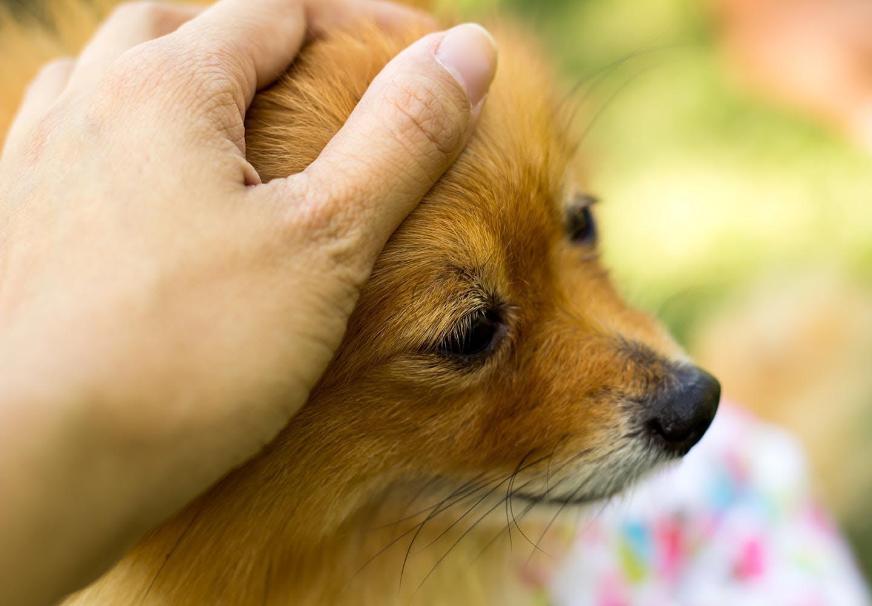 【獣医師監修】犬の分離不安症とは?原因や問題行動への対処法、改善の仕方について解説