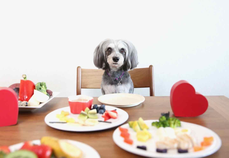 愛犬のお豆腐のチョコフォンデュ風プレート