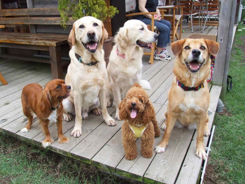 小型犬から大型犬までドッグガーデンで遊ぶ犬の姿