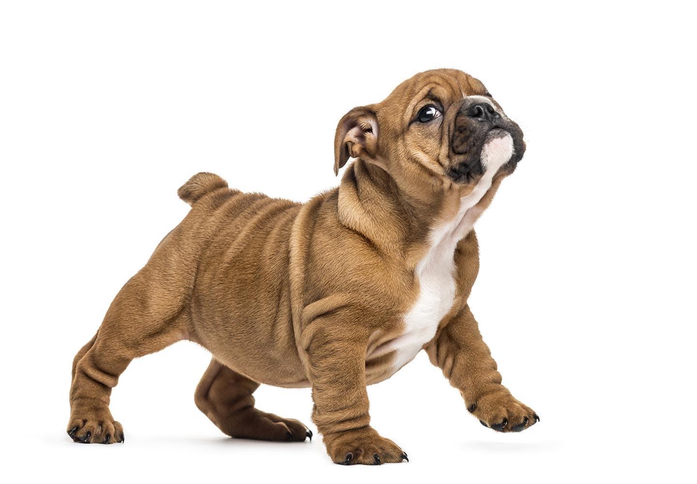 【獣医師監修】子犬が甘噛みする理由とは?対処法とやめさせるためのしつけについて解説