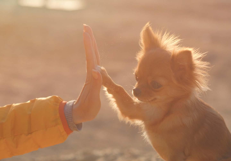 犬と人の信頼関係