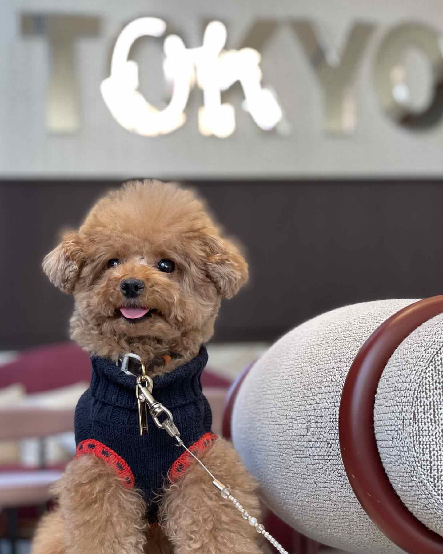 キンプトン新宿東京 ザ・ジョーンズ カフェ&バー 愛犬映える