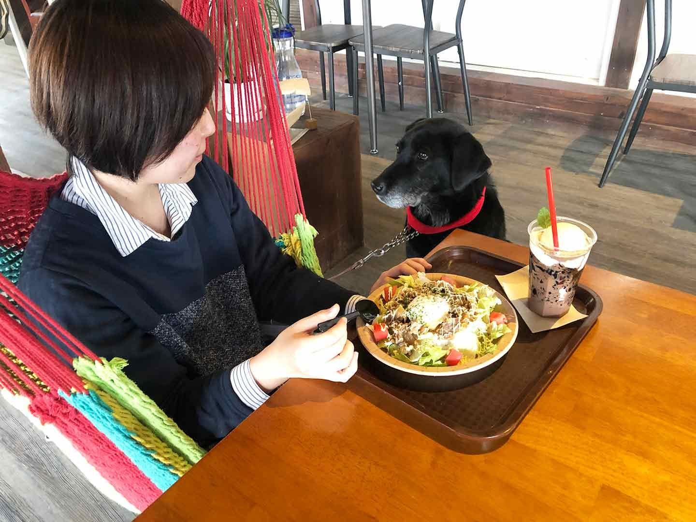 ハンモックカフェで食事する飼い主とテーブル側の犬