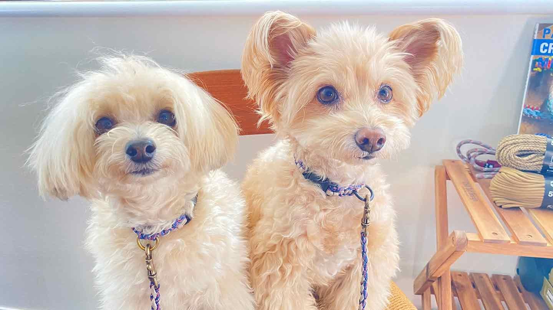 パラコード編みの犬用リード  強度バッチリ