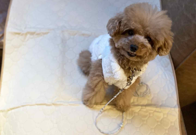 キンプトン新宿東京 犬用カフェマットとお水