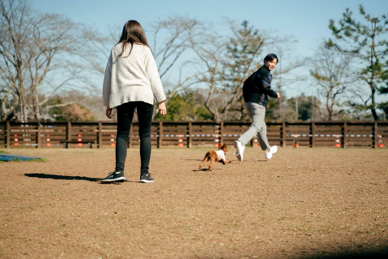 藤澤夫婦と愛犬ピノちゃん
