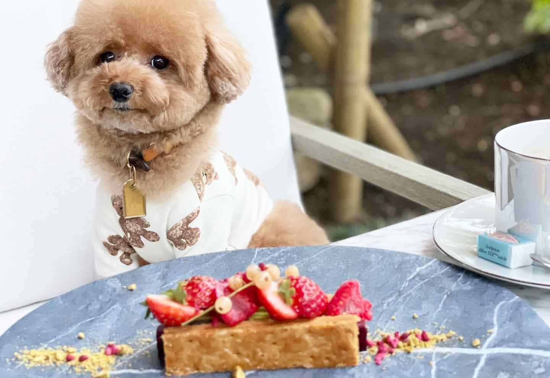 【原宿〜表参道〜代々木】愛犬と一緒に行ける!犬スタグラマーがオススメするごはんも美味しいお店3選