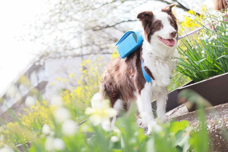 愛犬用ミニランドセル風の小物入れ 大型犬向け