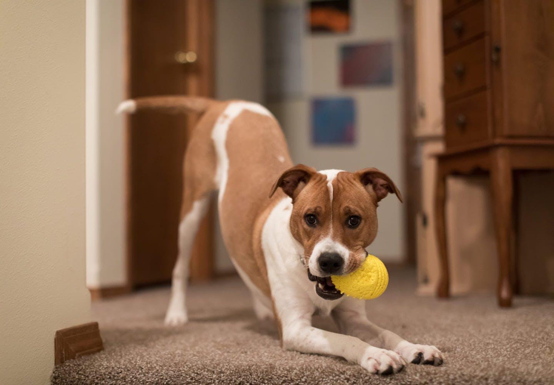 甘えん坊すぎる犬って問題なの?対処法と注意点、分離不安症との違いについても解説【獣医師監修】