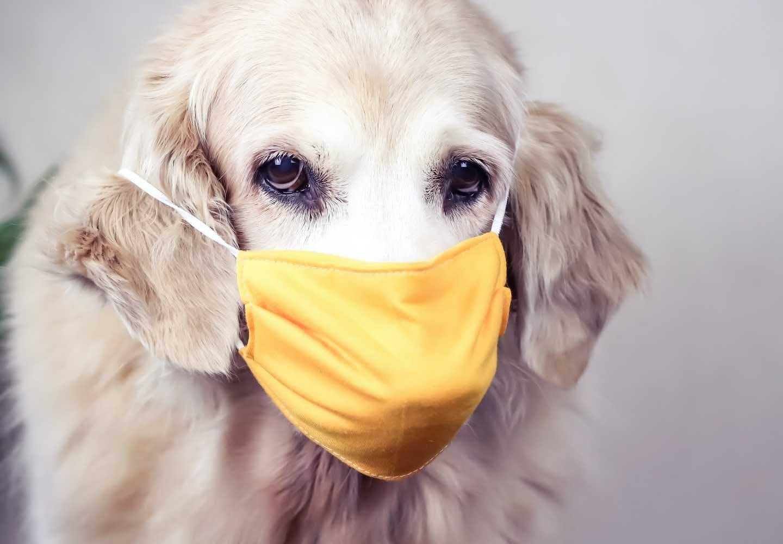 【獣医師監修】犬のアレルギー検査は必要?_犬、アレルギー検査