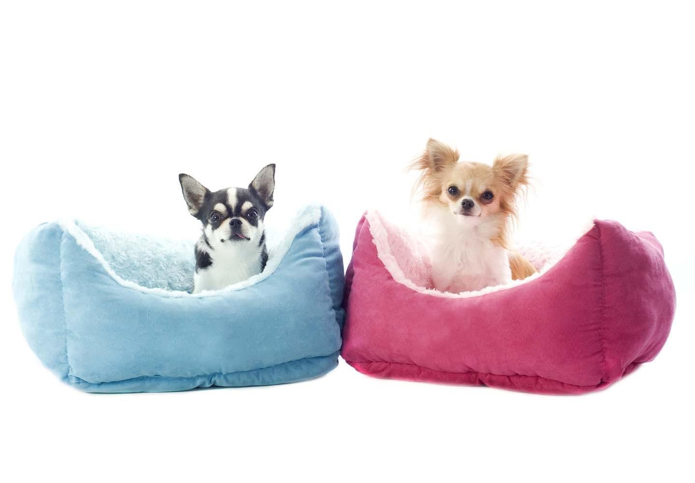 犬とベッド