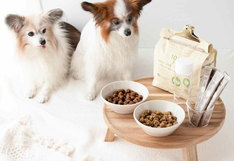 【混ぜるだけ】調理をしない手作り愛犬ごはん⁈超簡単なシャカシャカフレーバードッグフードの作り方