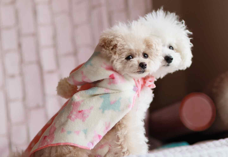 小型犬向け 愛犬用タオルフードポンチョ 完成