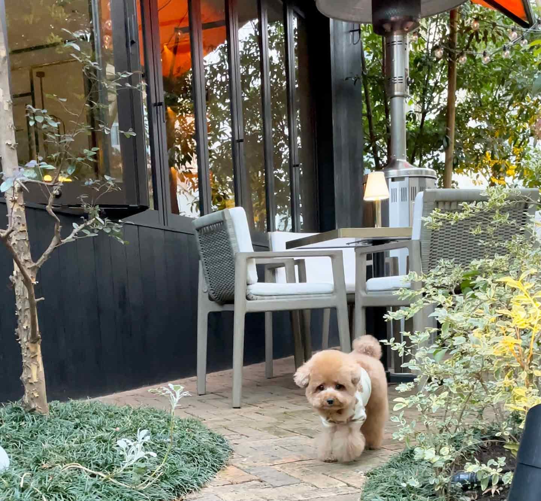 犬スタグラマーがオススメ ごはんも美味しいお店 ジェントルダイニング テラス席犬OK