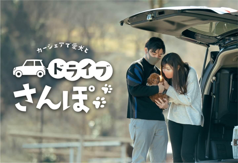 【1,000円OFF特典】犬OKのカーシェアで『ドライブ散歩』。ドッグランで楽しい休日を満喫しよう!