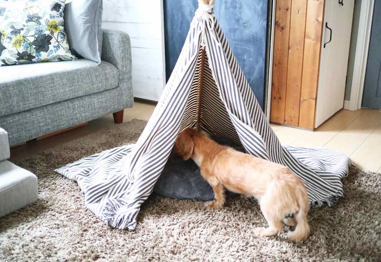 愛犬用の簡単ティピーテントのDIY ダックスフントが使ってみた