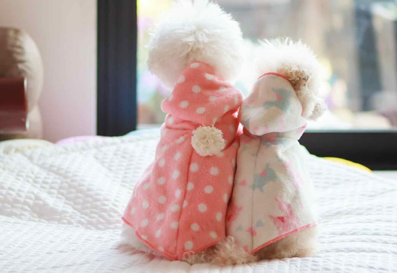 【簡単15分】型紙不要!100均のタオルで愛犬用フード付きポンチョを手作りしよう♪