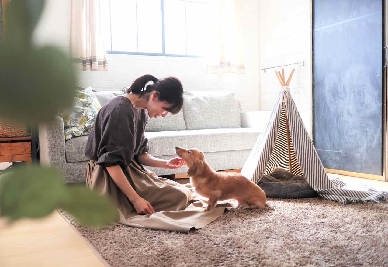 愛犬用の簡単ティピーテントのDIY リビング